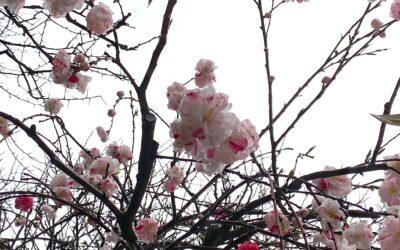 てらてつの春